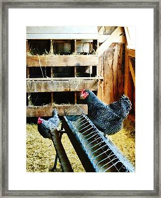 In The Chicken Coop Framed Print by Susan Savad