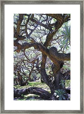 In The Depth Of Enchanting Forest II Framed Print by Jenny Rainbow