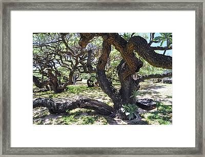 In The Depth Of Enchanting Forest Iv Framed Print by Jenny Rainbow