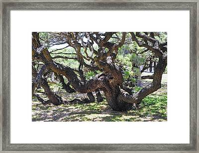 In The Depth Of Enchanting Forest Vi Framed Print by Jenny Rainbow