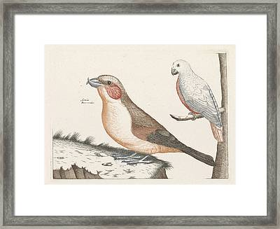 In The Foreground A Crossbill, Right On A Branch A White Framed Print by Anonymous