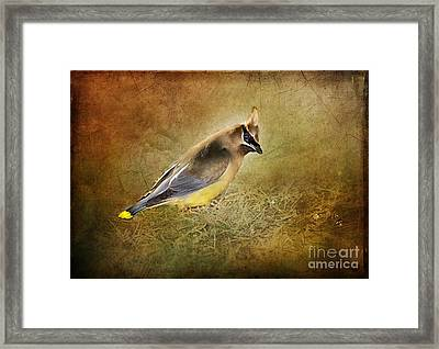 In The Forest Framed Print by Betty LaRue