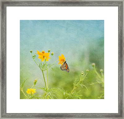 In The Garden - Monarch Butterfly Framed Print by Kim Hojnacki
