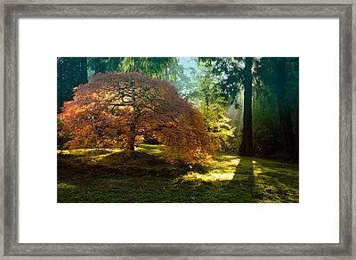 In The Gentle Autumn Light Framed Print by Don Schwartz