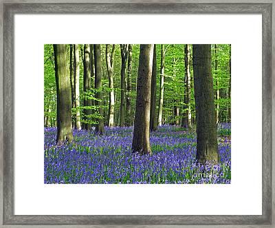 In The Heart Of The Bluebell Woods Framed Print by Elizabeth Debenham