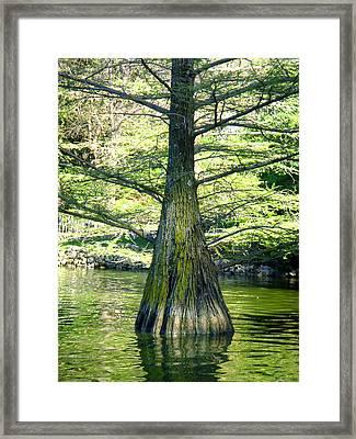 In The Lake Framed Print by Roberto Alamino