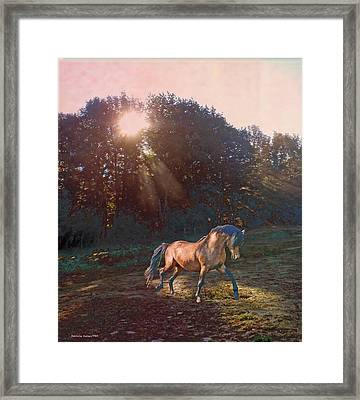 In The Light Framed Print by Patricia Keller