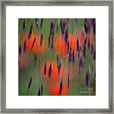 In The Meadow Framed Print by Heiko Koehrer-Wagner