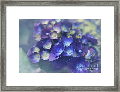 In The Morning Mists Framed Print by Sharon Mau