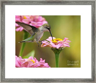 In The Pink Framed Print by Olivia Hardwicke