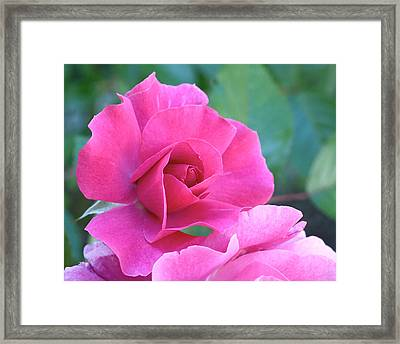 In The Pink Framed Print by Rona Black