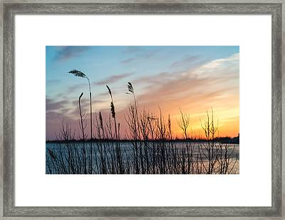 In The Reeds Framed Print by Kristopher Schoenleber