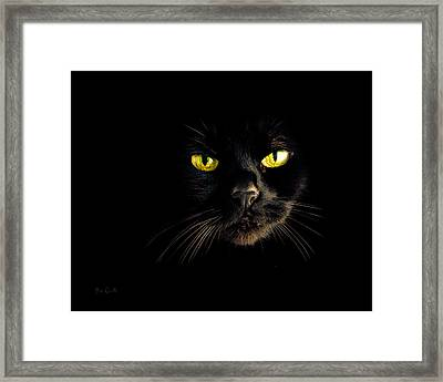 In The Shadows One Black Cat Framed Print by Bob Orsillo