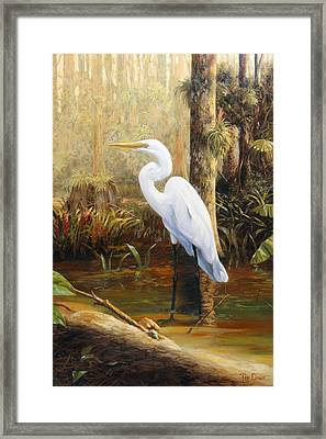 In The Shallows Framed Print by Tim Davis