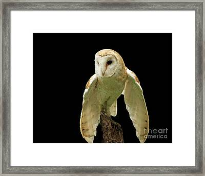 In The Still Of Night Barn Owl Framed Print by Inspired Nature Photography Fine Art Photography