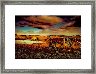 In The Tolt Framed Print by Buffalo Fawn Photography