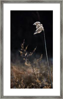 In The Wind Framed Print by JC Findley