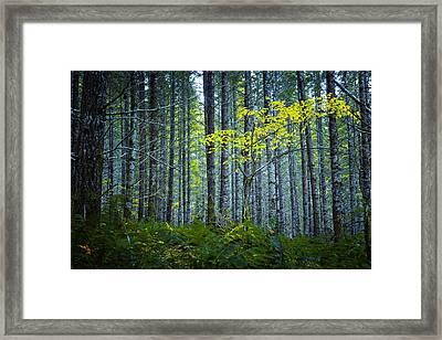 In The Woods Framed Print by Belinda Greb