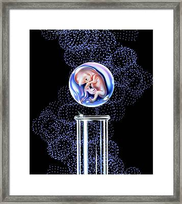 In Vitro Fertilisation Framed Print by John Bavosi