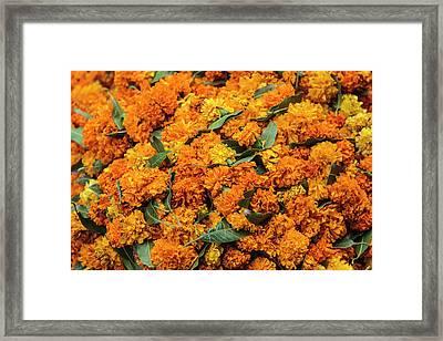 India, Delhi, Heap Of Marigold Offerings Framed Print by Alida Latham