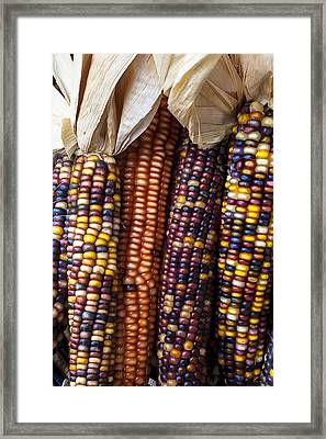 Indian Corn Close Up Framed Print by Garry Gay