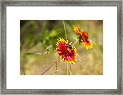 Indian Fire Wheels With Bee Framed Print by Mark Weaver