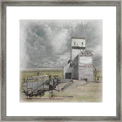 Indian Head Grain  Framed Print by Jeff Burgess