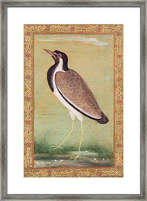 Indian Lapwing Framed Print by Mansur