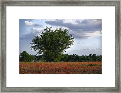 Indian Paint Brush Revisited Framed Print by Linda Phelps