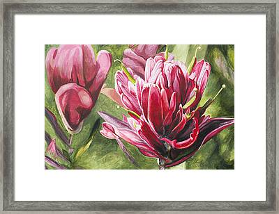 Indian Paintbrush Framed Print by Aaron Spong