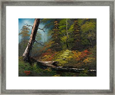 Secluded Forest Framed Print by C Steele