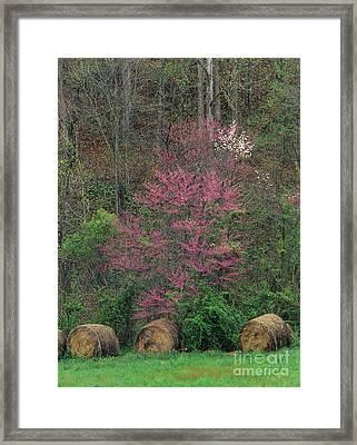 Indiana Spring - Fm000092 Framed Print by Daniel Dempster