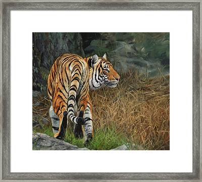 Indo-chinese Tiger Framed Print by David Stribbling
