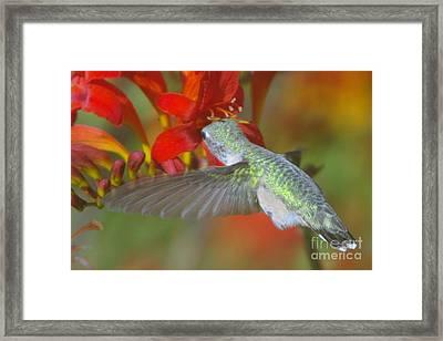 Indulgence  Framed Print by Jeff Swan