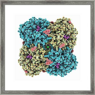 Influenza Enzyme And Zanamivir Drug Framed Print by Laguna Design