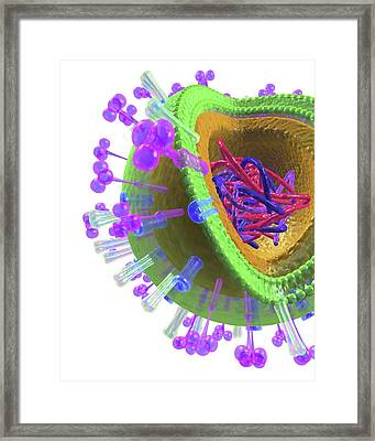 Influenza Virus Structure Framed Print by Alfred Pasieka