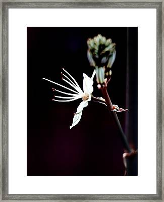 infrared Asphodel Framed Print by Stelios Kleanthous