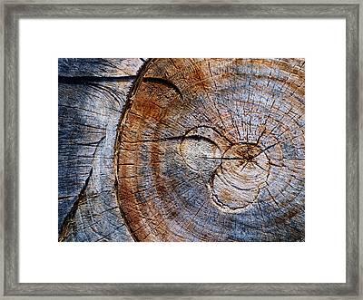 Ingrain Framed Print by Tom Druin