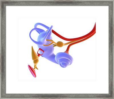 Inner Ear Anatomy Framed Print by Alfred Pasieka
