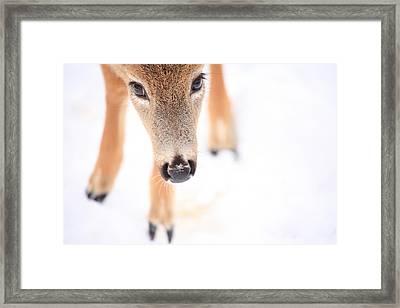 Innocent Eyes Framed Print by Karol Livote