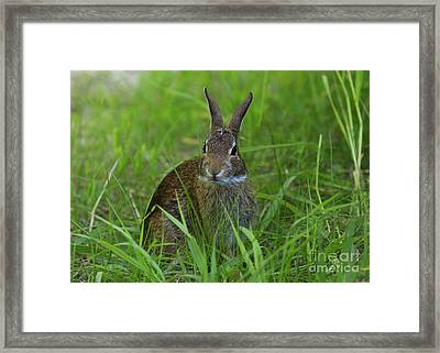 Inquisitive Rabbit Watching You Framed Print by Inspired Nature Photography Fine Art Photography