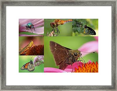 Insect Macro Photography Art Framed Print by Juergen Roth