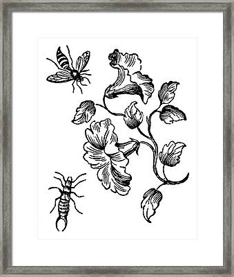 Insects Bee & Earwig Framed Print by Granger