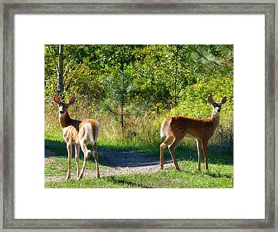 Inseparable Twosome Framed Print by Will Borden
