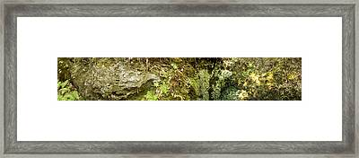 Inside A Sinkhole Panorama Framed Print by Rich Leighton
