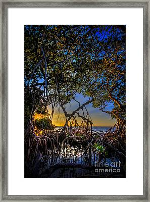 Inside Looking Out Framed Print by Marvin Spates