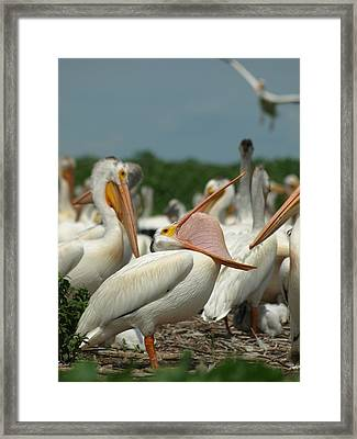 Insideout Framed Print by James Peterson