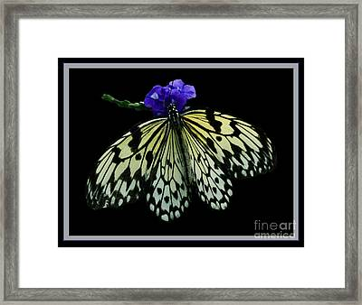 Inspired By Butterflies  Framed Print by Inspired Nature Photography Fine Art Photography