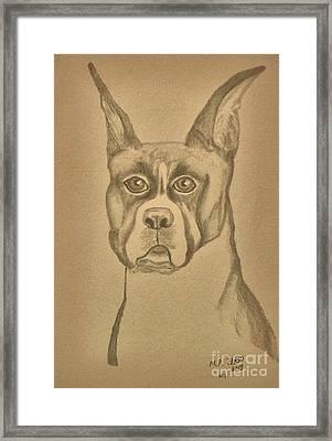 Intelligence - Boxer Framed Print by Maria Urso