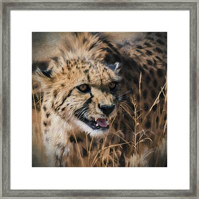 Intensity - Cheetah - Africa  Framed Print by Shara Lee